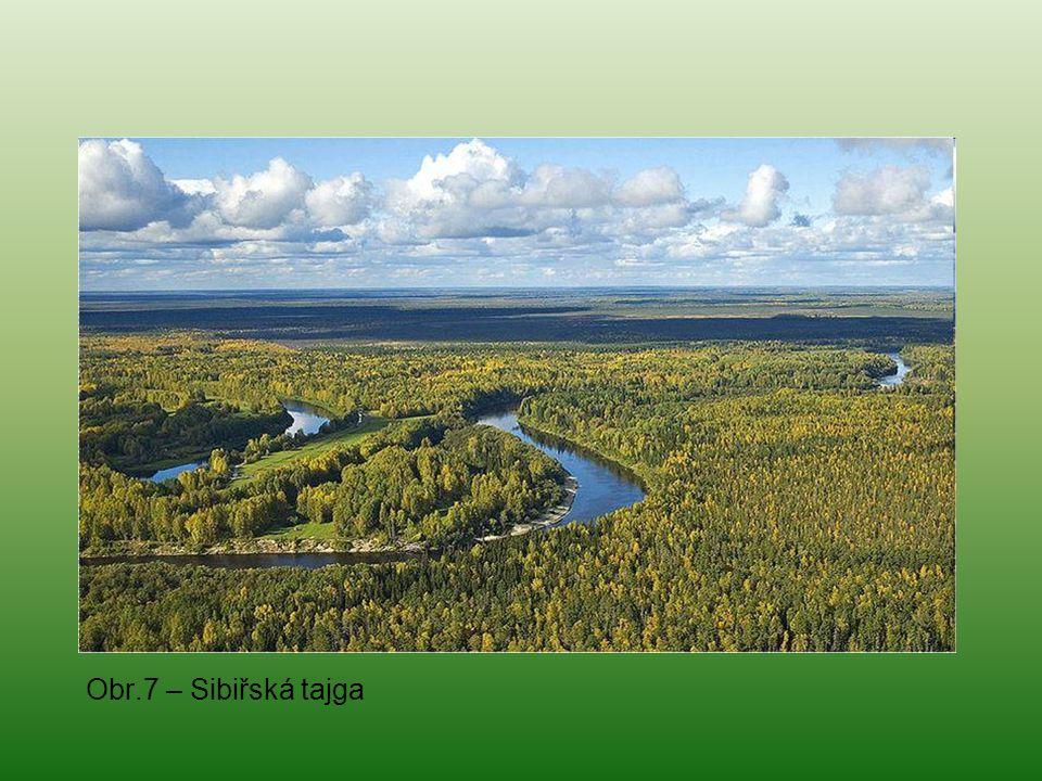 Obr.7 – Sibiřská tajga