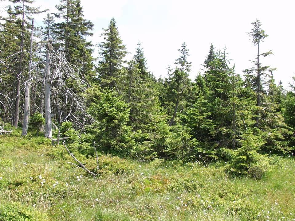 Edafické hranice lesa •Hranice mokrá, tvořící přechod k bažinám a rašeliništím a na okrajích limnických (vodních) ekosystémů (zejména moří a oceánů).