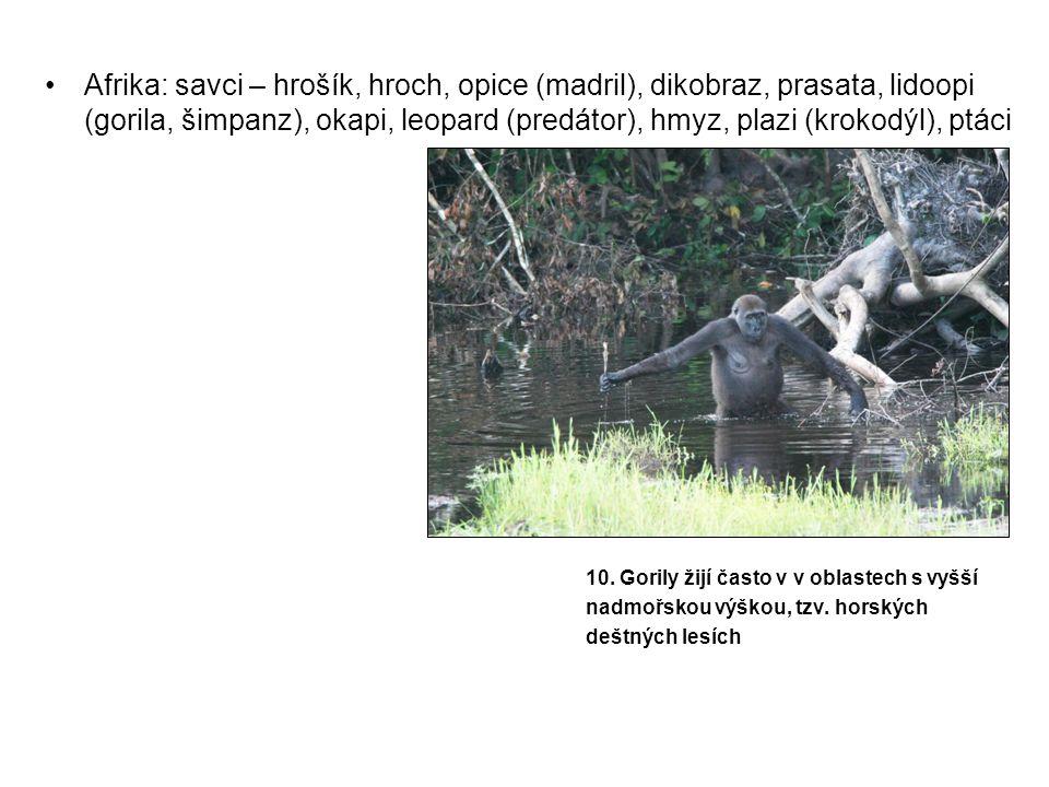 •Afrika: savci – hrošík, hroch, opice (madril), dikobraz, prasata, lidoopi (gorila, šimpanz), okapi, leopard (predátor), hmyz, plazi (krokodýl), ptáci