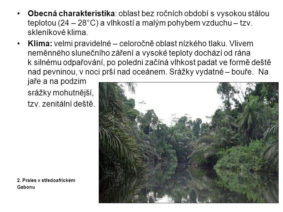 •Množství srážek – na vodu bohaté řeky s celoročně vysokým průtokem výrazně ovlivňují všechny tři hlavní oblasti: •jihoamerickou (povodí Amazonky a Orinoka) •africkou (povodí Konga) •jihovýchodní Asie (Indonésie, Nová Guinea – krátké ale vydatné toky) 3.
