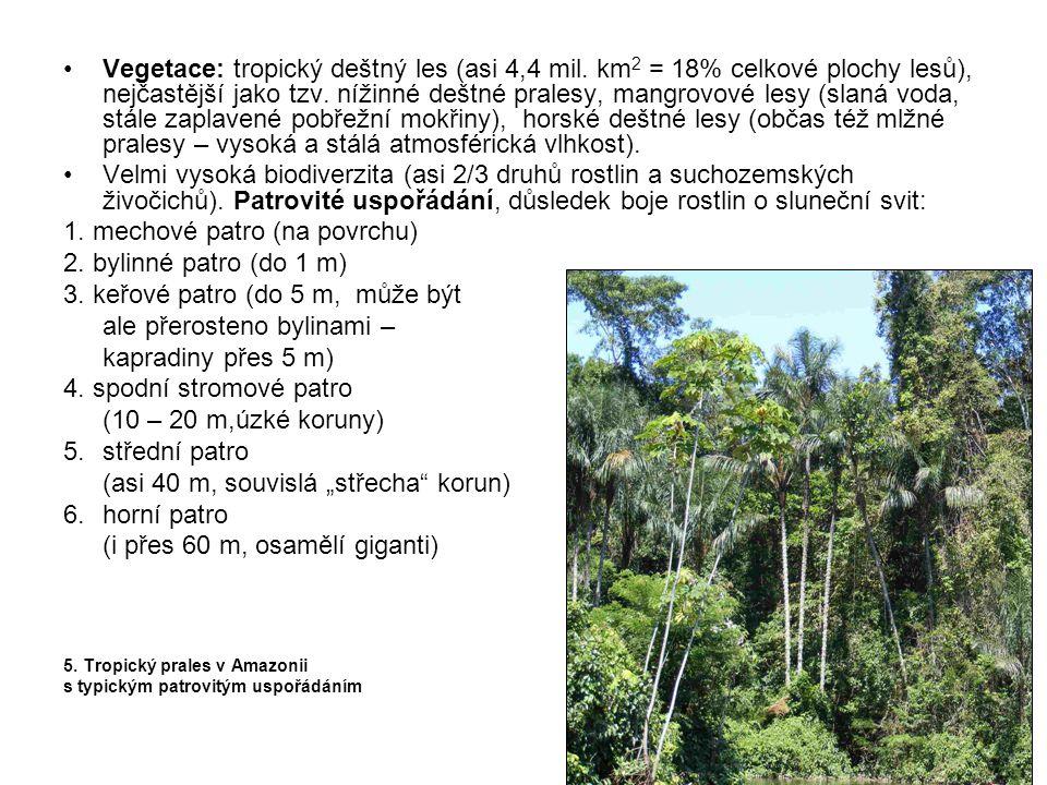 •Vegetace: tropický deštný les (asi 4,4 mil. km 2 = 18% celkové plochy lesů), nejčastější jako tzv. nížinné deštné pralesy, mangrovové lesy (slaná vod
