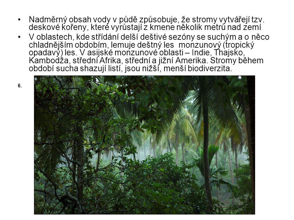 •Nadměrný obsah vody v půdě způsobuje, že stromy vytvářejí tzv. deskové kořeny, které vyrůstají z kmene několik metrů nad zemí •V oblastech, kde stříd