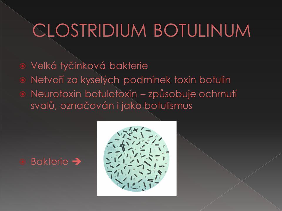  Velká tyčinková bakterie  Netvoří za kyselých podmínek toxin botulin  Neurotoxin botulotoxin – způsobuje ochrnutí svalů, označován i jako botulism