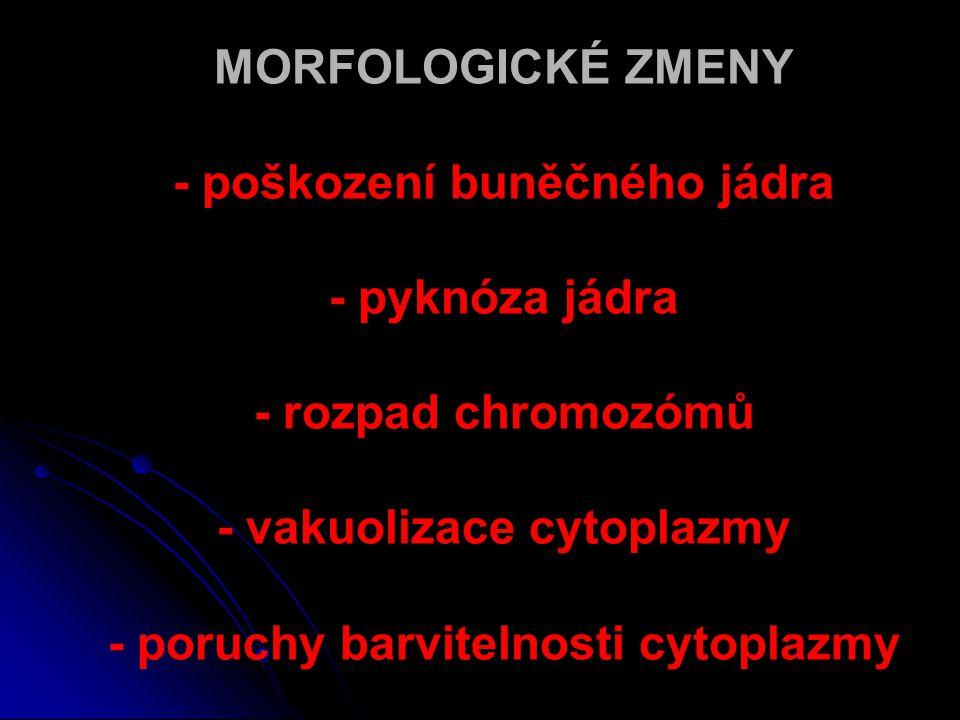 MORFOLOGICKÉ ZMENY - poškození buněčného jádra - pyknóza jádra - rozpad chromozómů - vakuolizace cytoplazmy - poruchy barvitelnosti cytoplazmy
