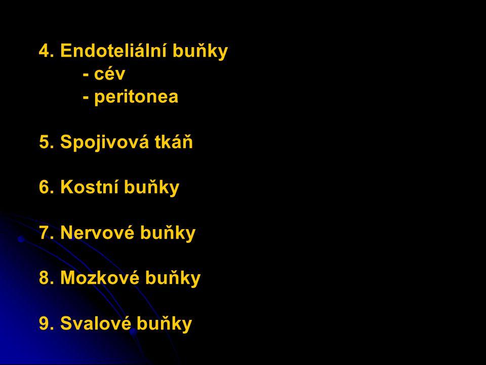 4. Endoteliální buňky - cév - peritonea 5. Spojivová tkáň 6. Kostní buňky 7. Nervové buňky 8. Mozkové buňky 9. Svalové buňky