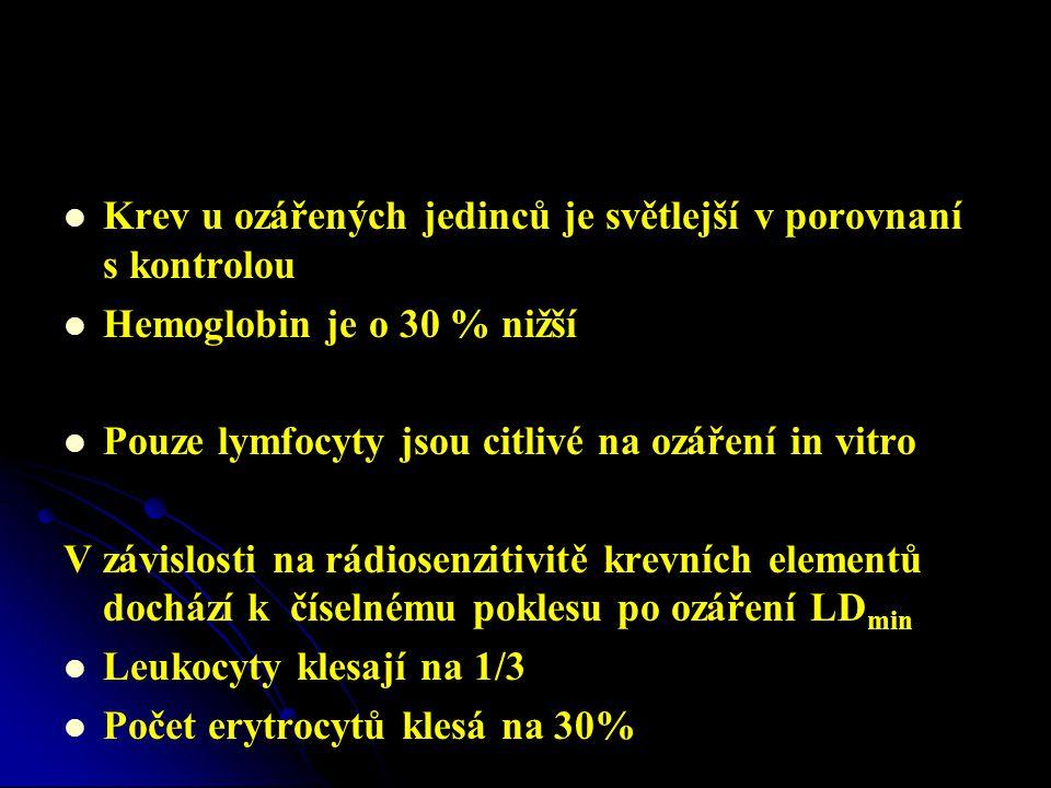   Krev u ozářených jedinců je světlejší v porovnaní s kontrolou   Hemoglobin je o 30 % nižší   Pouze lymfocyty jsou citlivé na ozáření in vitro V závislosti na rádiosenzitivitě krevních elementů dochází k číselnému poklesu po ozáření LD min   Leukocyty klesají na 1/3   Počet erytrocytů klesá na 30%