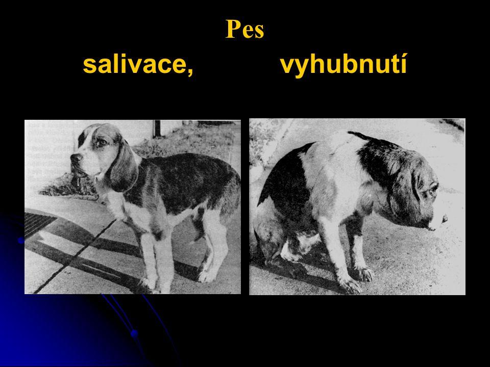 Pes salivace, vyhubnutí