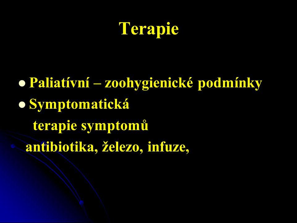 Terapie   Paliatívní – zoohygienické podmínky   Symptomatická terapie symptomů antibiotika, železo, infuze,