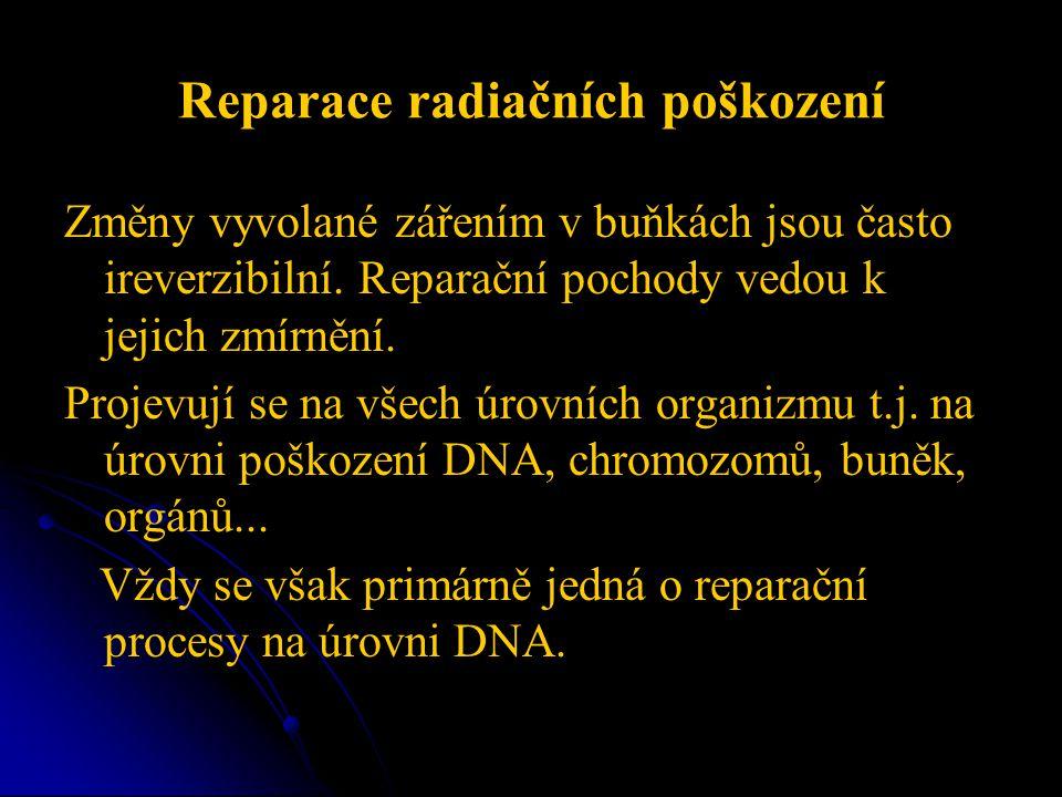 Reparace radiačních poškození Změny vyvolané zářením v buňkách jsou často ireverzibilní. Reparační pochody vedou k jejich zmírnění. Projevují se na vš