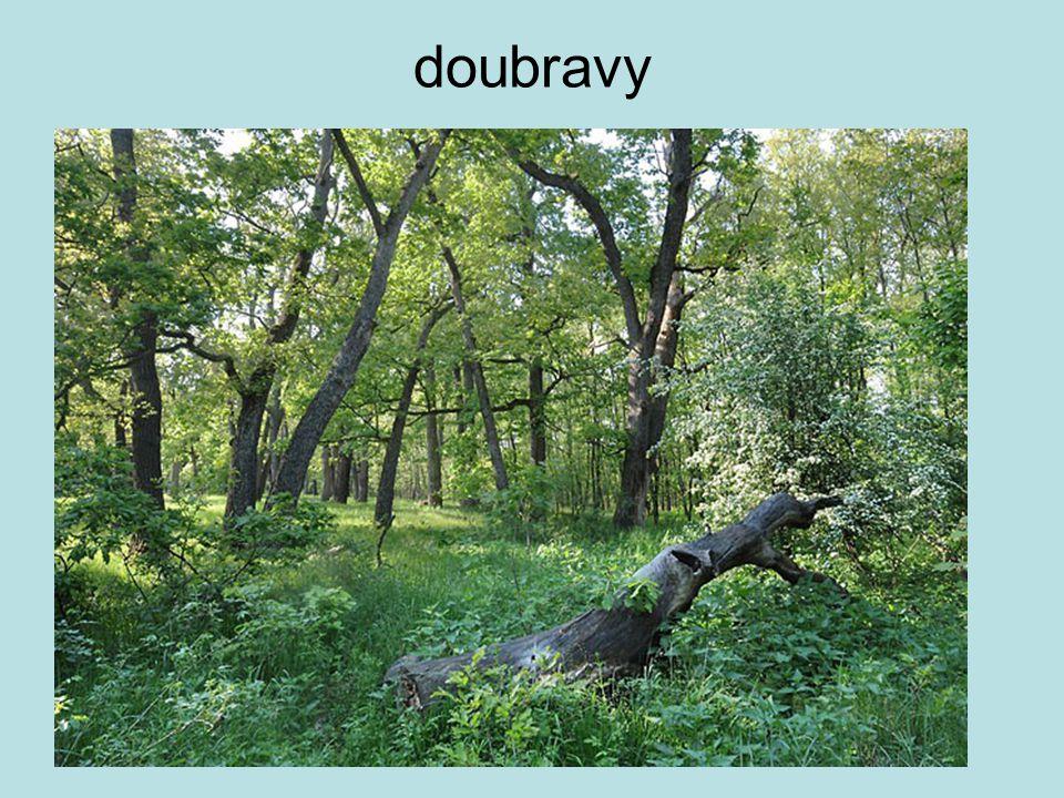 doubravy