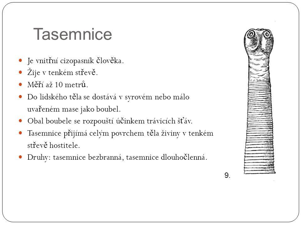Tasemnice bezbranná  Které orgánové soustavy tasemnice vzhledem ke svému zp ů sobu života pot ř ebuje.