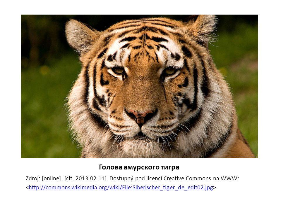 Голова амурского тигра Zdroj: [online].[cit. 2013-02-11].