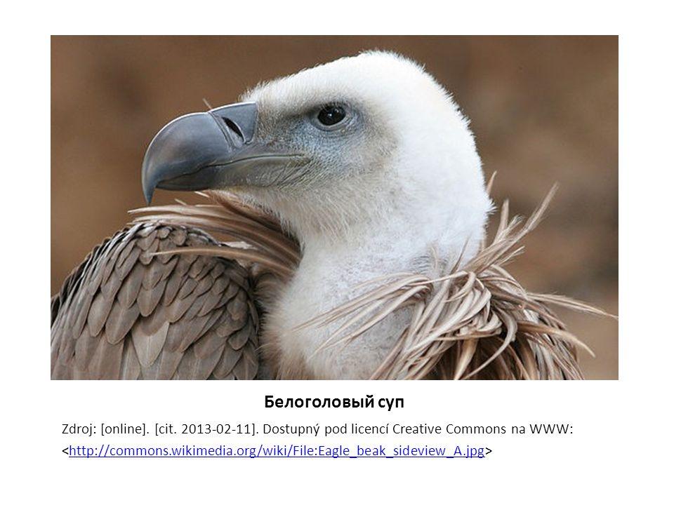 Белоголовый суп Zdroj: [online]. [cit. 2013-02-11]. Dostupný pod licencí Creative Commons na WWW: http://commons.wikimedia.org/wiki/File:Eagle_beak_si