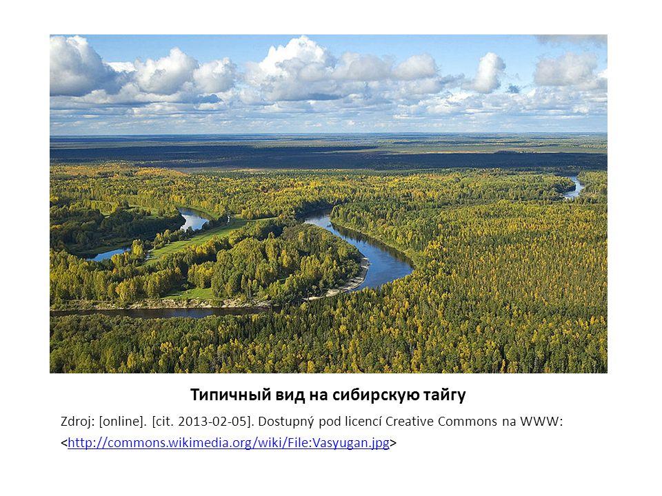 Типичный вид на сибирскую тайгу Zdroj: [online]. [cit. 2013-02-05]. Dostupný pod licencí Creative Commons na WWW: http://commons.wikimedia.org/wiki/Fi