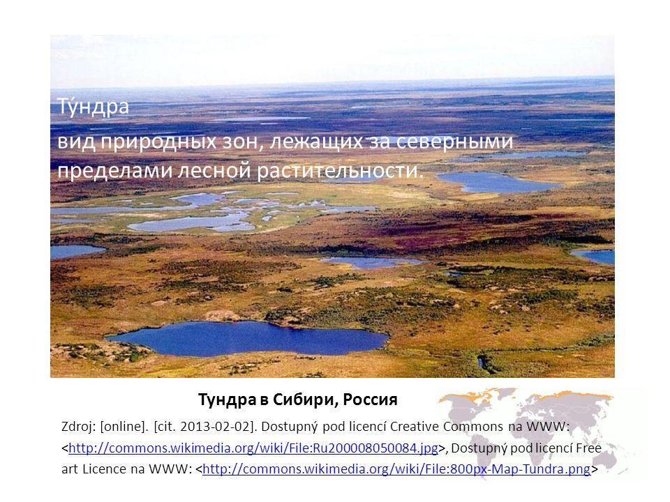 Тундрa в Сибири, Россия Zdroj: [online].[cit. 2013-02-02].