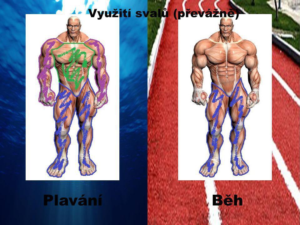 Využití svalů (převážně) BěhPlavání
