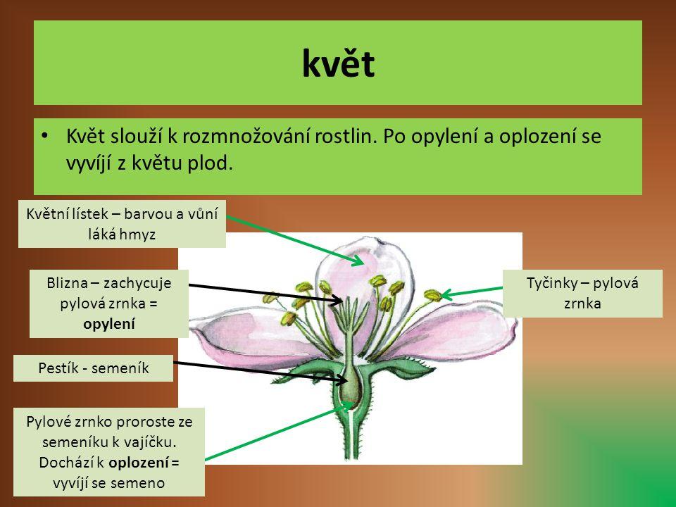 květ • Květ slouží k rozmnožování rostlin. Po opylení a oplození se vyvíjí z květu plod. Květní lístek – barvou a vůní láká hmyz Pestík - semeník Pylo