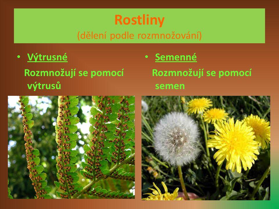 Rostliny (dělení podle rozmnožování) • Výtrusné Rozmnožují se pomocí výtrusů • Semenné Rozmnožují se pomocí semen