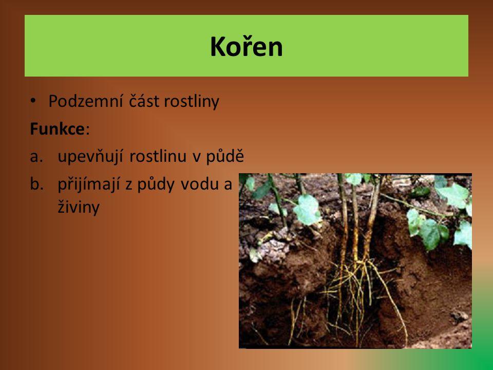 Kořen • Podzemní část rostliny Funkce: a.upevňují rostlinu v půdě b.přijímají z půdy vodu a živiny