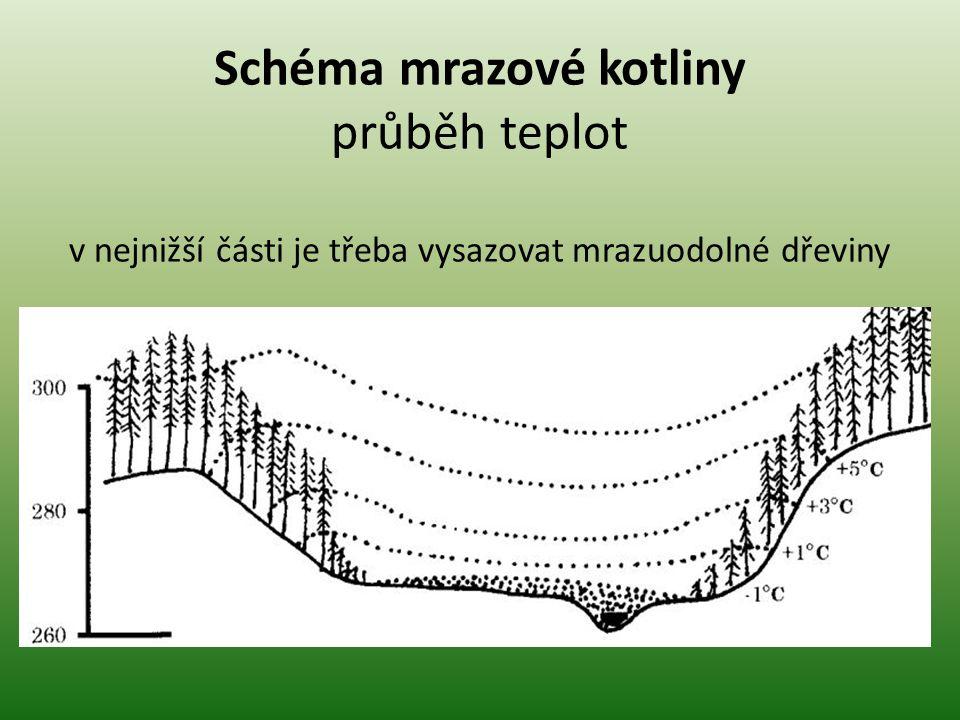 Schéma mrazové kotliny průběh teplot v nejnižší části je třeba vysazovat mrazuodolné dřeviny
