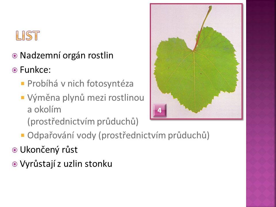  Nadzemní orgán rostlin  Funkce:  Probíhá v nich fotosyntéza  Výměna plynů mezi rostlinou a okolím (prostřednictvím průduchů)  Odpařování vody (p