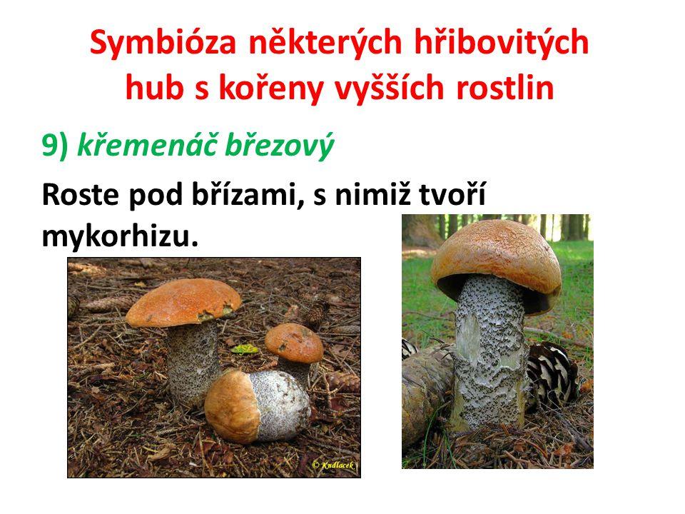Symbióza některých hřibovitých hub s kořeny vyšších rostlin 10) křemenáč dubový Všechny křemenáče jsou mykorhitické.