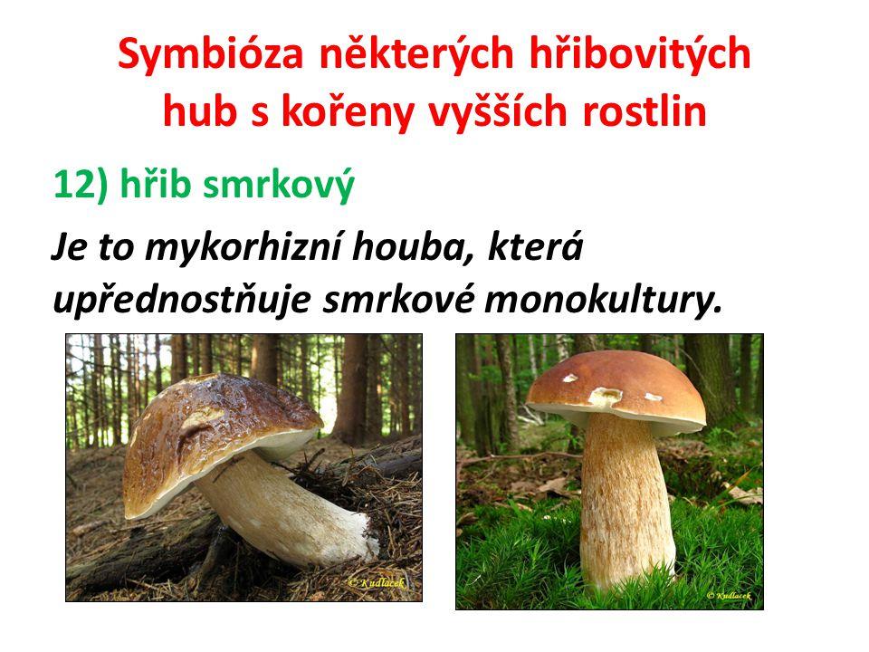 Symbióza některých hřibovitých hub s kořeny vyšších rostlin hřib smrkový