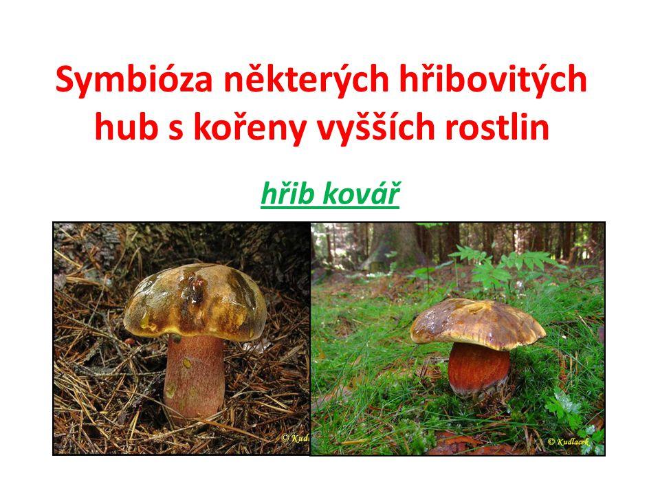 Symbióza některých hřibovitých hub s kořeny vyšších rostlin 2) klouzek dutonohý = hřib dutonohý Je to mykorhizní houba a žije v symbióze s modříny.