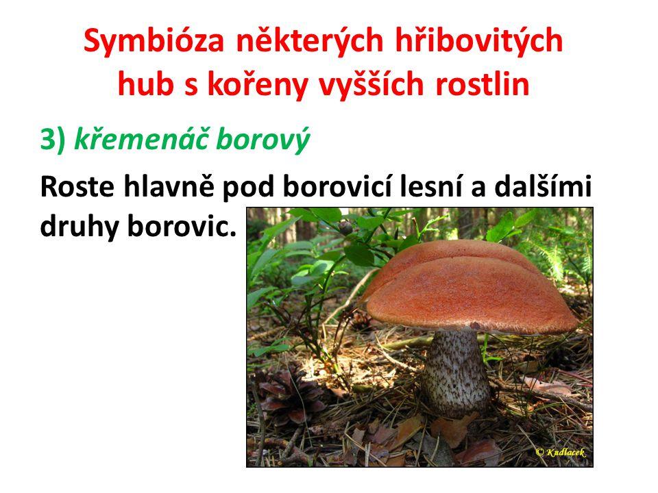 Symbióza některých hřibovitých hub s kořeny vyšších rostlin 4) hřib dubový Roste v listnatých a smíšených lesích, převážně duby a buky, ale je možné jej také nalézt pod břízou, nebo pod lípou.