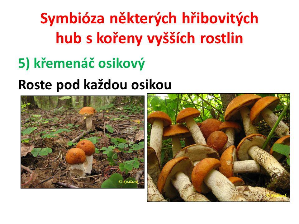 Symbióza některých hřibovitých hub s kořeny vyšších rostlin 6) klouzek sličný = klouzek modřínový Roste výhradně pod modříny.