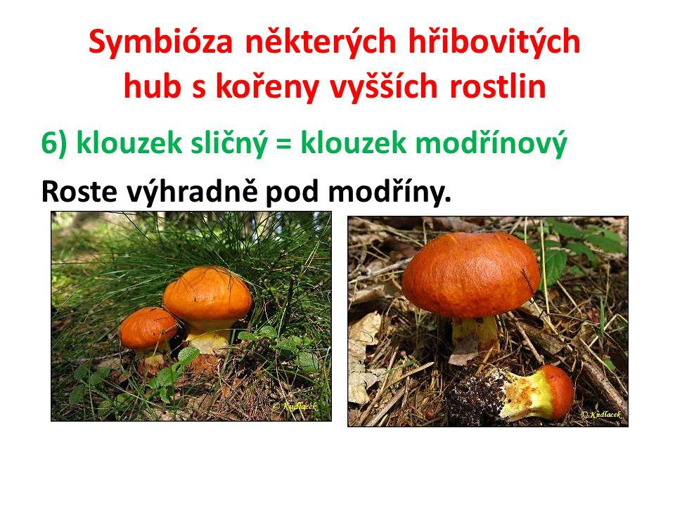 Symbióza některých hřibovitých hub s kořeny vyšších rostlin 7) hřib koloděj Roste častěji v lesích listnatých, protože tvoří mykorhizu s duby, buky, lipami, břízami a habry.