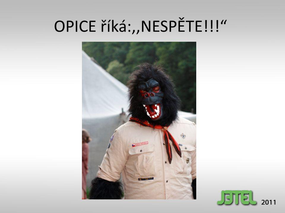 """OPICE říká:,,NESPĚTE!!!"""""""