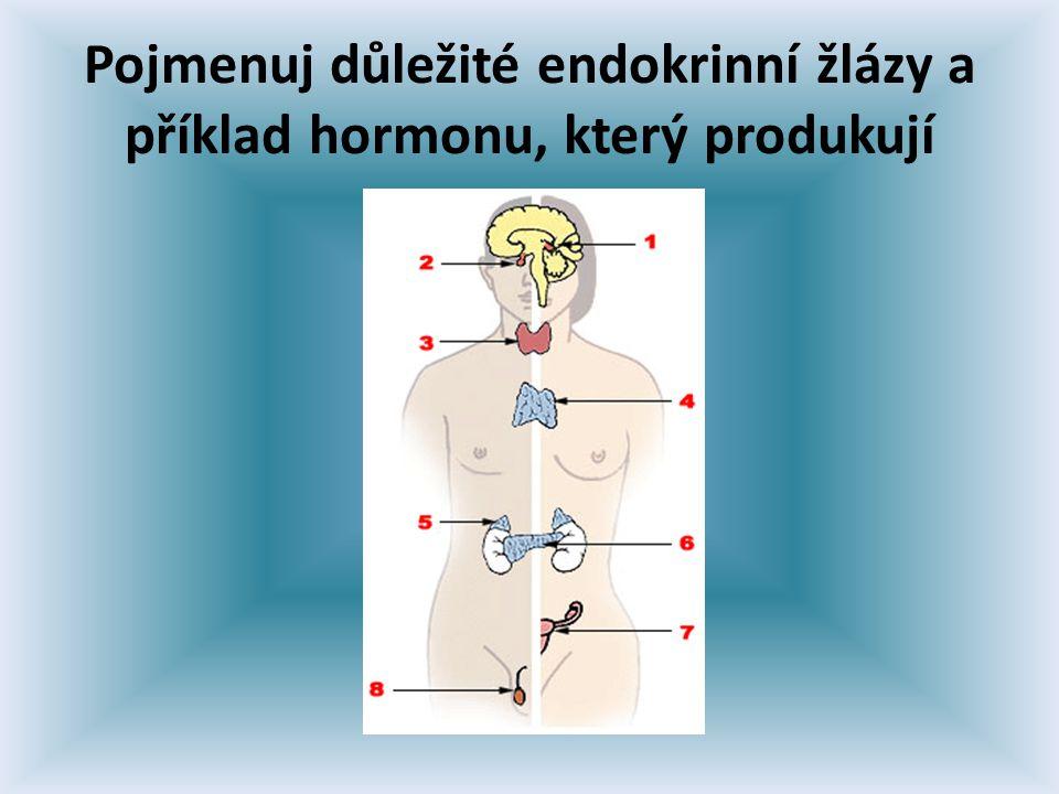 Pojmenuj důležité endokrinní žlázy a příklad hormonu, který produkují