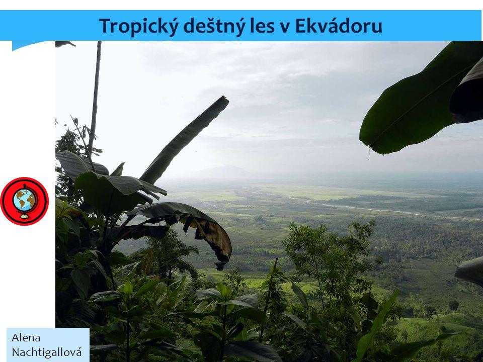 Tropický deštný les v Ekvádoru Alena Nachtigallová