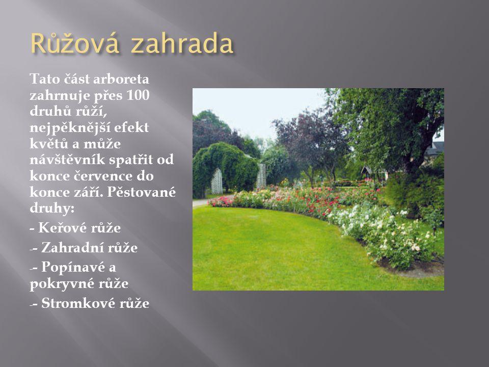 R ůž ová zahrada Tato část arboreta zahrnuje přes 100 druhů růží, nejpěknější efekt květů a může návštěvník spatřit od konce července do konce září.