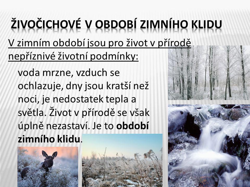 V zimním období jsou pro život v přírodě nepříznivé životní podmínky: 3 voda mrzne, vzduch se ochlazuje, dny jsou kratší než noci, je nedostatek tepla