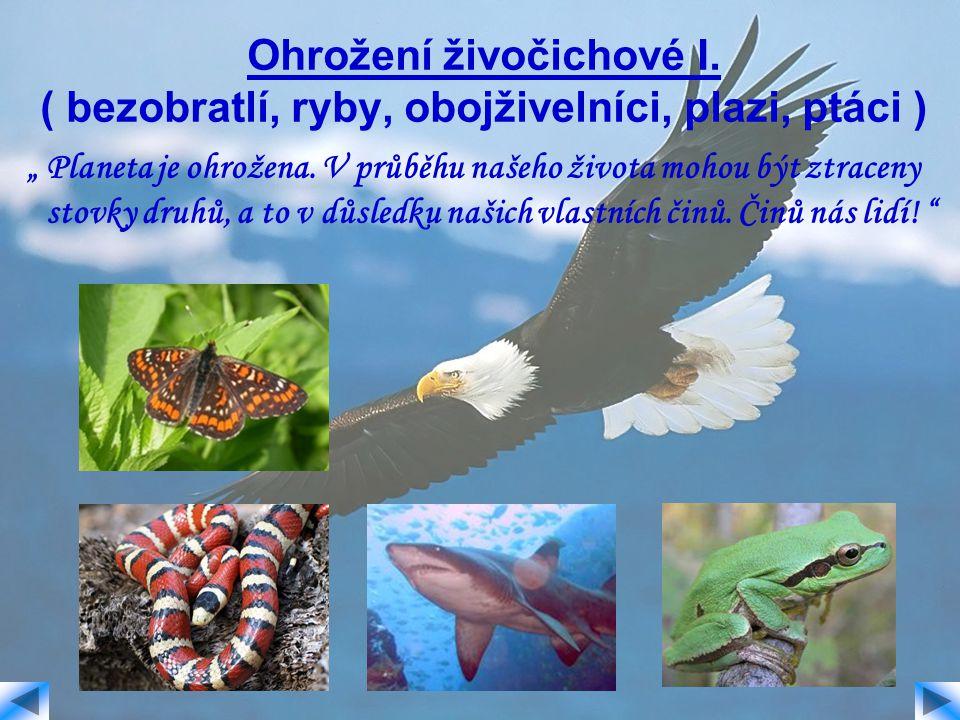 """Ohrožení živočichové I. ( bezobratlí, ryby, obojživelníci, plazi, ptáci ) """" Planeta je ohrožena. V průběhu našeho života mohou být ztraceny stovky dru"""