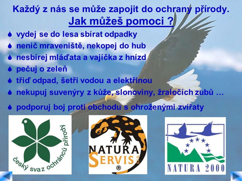 Každý z nás se může zapojit do ochrany přírody. Jak můžeš pomoci ?  vydej se do lesa sbírat odpadky  nenič mraveniště, nekopej do hub  nesbírej mlá