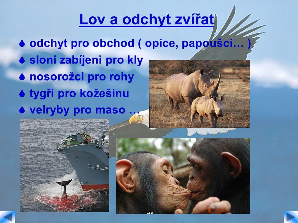 Lov a odchyt zvířat  odchyt pro obchod ( opice, papoušci… )  sloni zabíjeni pro kly  nosorožci pro rohy  tygři pro kožešinu  velryby pro maso …