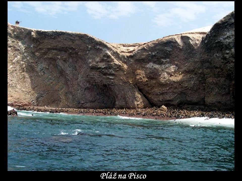 Na pobřeží Pisco …