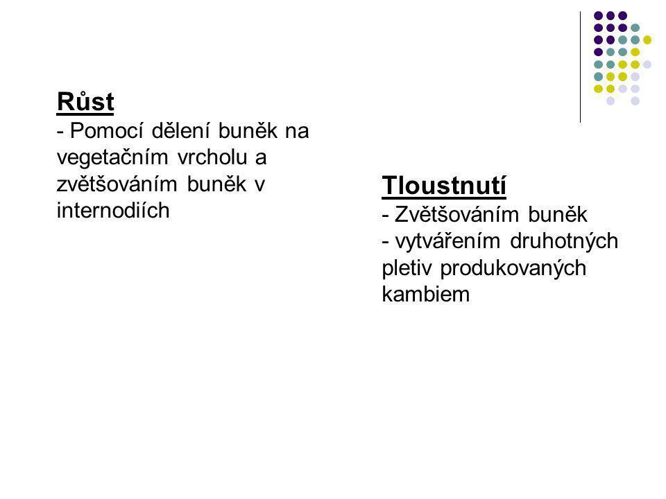 Vytváření sekundární kůry (peridermu) primární kůra epidermis korek (felém) felogén feloderm