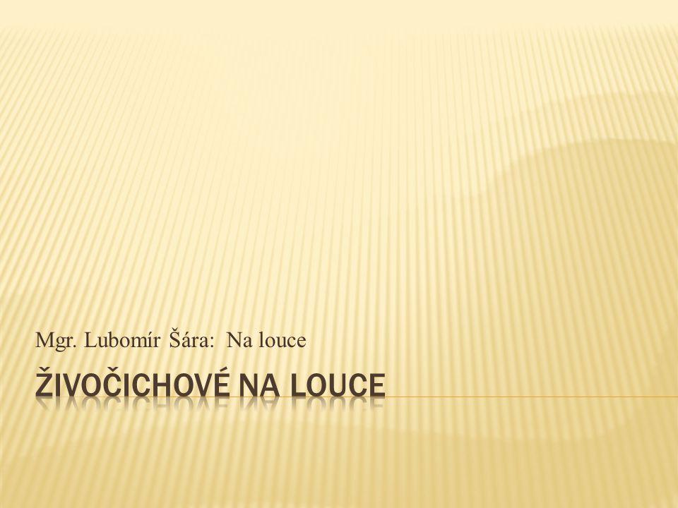 Mgr. Lubomír Šára: Na louce