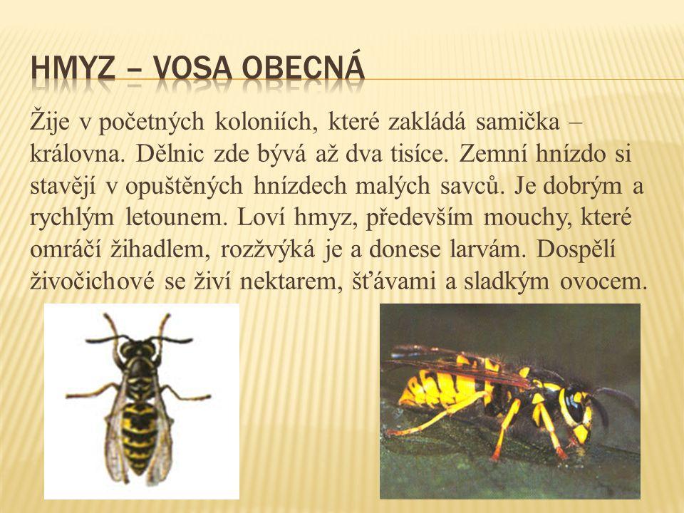 Žije v početných koloniích, které zakládá samička – královna.