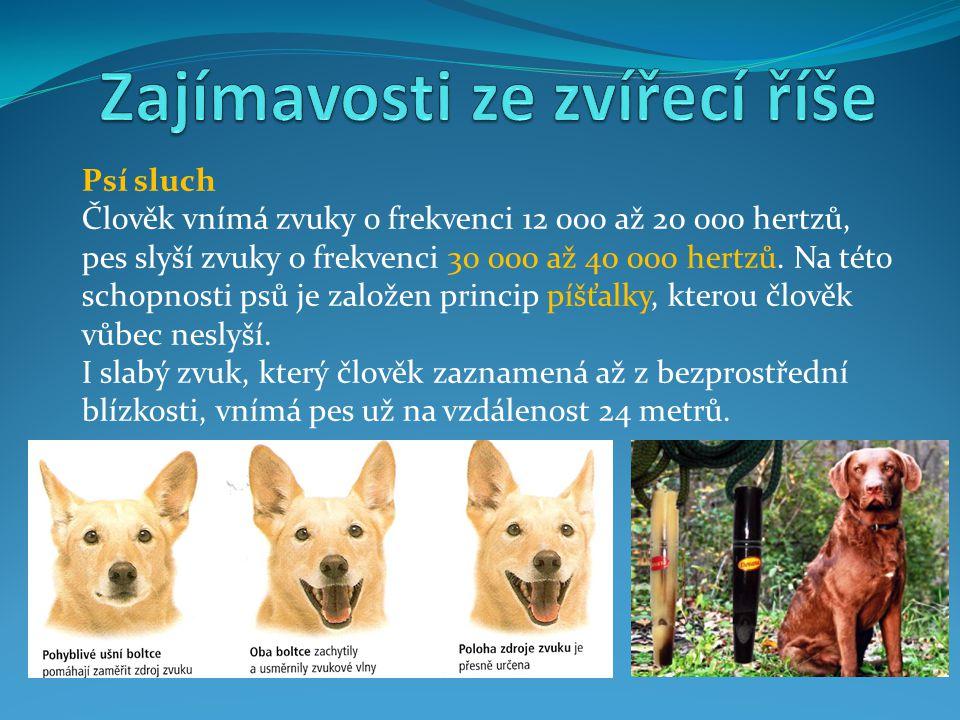 Psí sluch Člověk vnímá zvuky o frekvenci 12 000 až 20 000 hertzů, pes slyší zvuky o frekvenci 30 000 až 40 000 hertzů. Na této schopnosti psů je založ