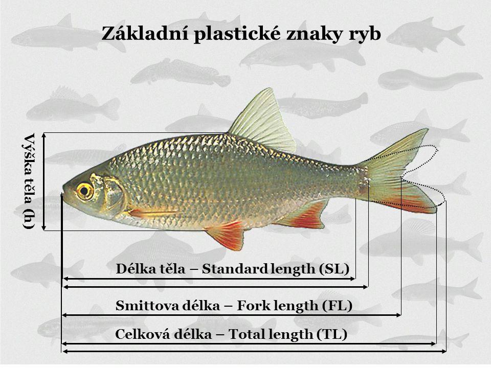 Délka těla – Standard length (SL) Celková délka – Total length (TL) Výška těla (h) Základní plastické znaky ryb Smittova délka – Fork length (FL)