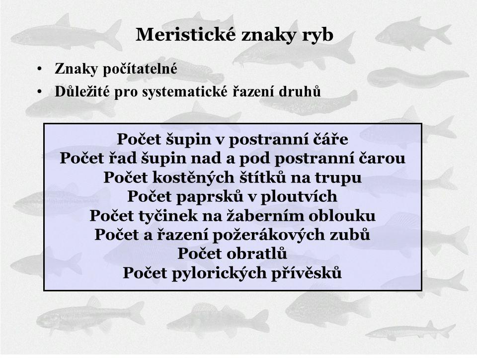 Meristické znaky ryb •Znaky počítatelné •Důležité pro systematické řazení druhů Počet šupin v postranní čáře Počet řad šupin nad a pod postranní čarou