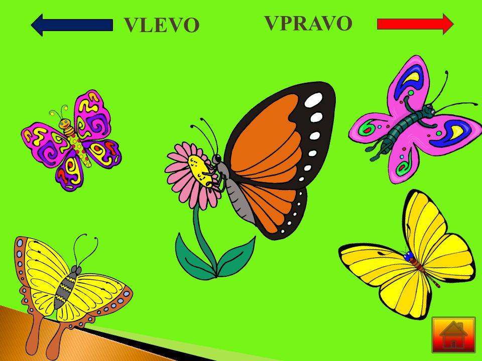 Bylo jaro a na louce vykvetly kytičky.Všude létalo mnoho motýlů.