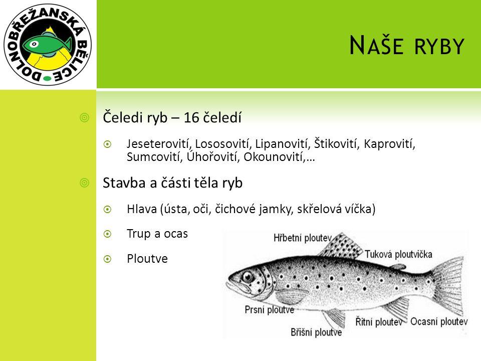 N AŠE RYBY  Čeledi ryb – 16 čeledí  Jeseterovití, Lososovití, Lipanovití, Štikovití, Kaprovití, Sumcovití, Úhořovití, Okounovití,…  Stavba a části