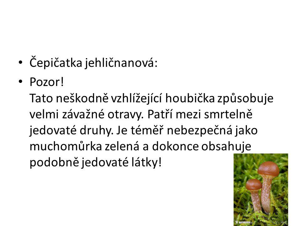 • Čepičatka jehličnanová: • Pozor! Tato neškodně vzhlížející houbička způsobuje velmi závažné otravy. Patří mezi smrtelně jedovaté druhy. Je téměř neb