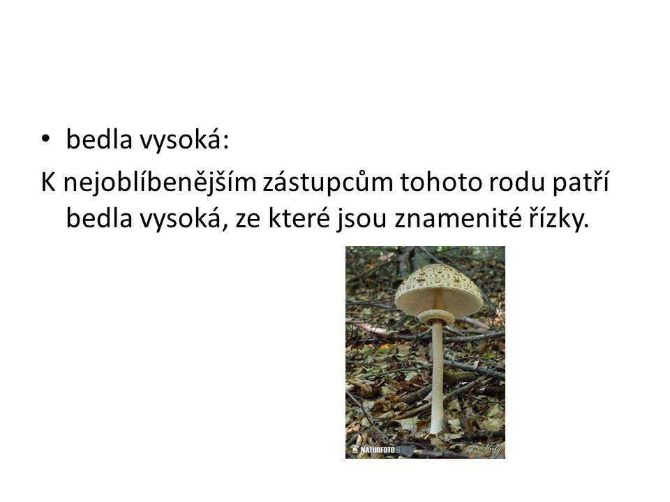 Jedovaté houby • Hřib satan: Hřib satan roste poměrně vzácně v teplomilných listnatých lesích.